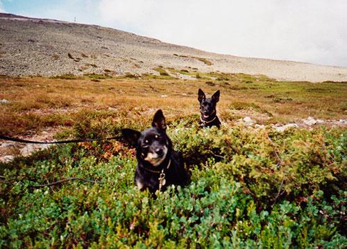 Nora ja Ronda jänkhällä